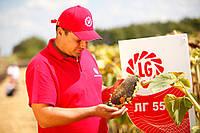 Семена подсолнуха ЛГ 5665М, фото 1
