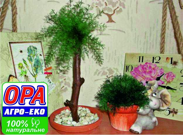 Рослини очищаючі повітря
