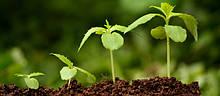Укоренители, корнеобразователи и стимуляторы роста растений
