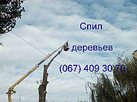 Спил дерев (067) 232 77 81