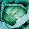 Семена капусты б/к Амагер Дауер 0,5 кг. Коуел (Хортус)