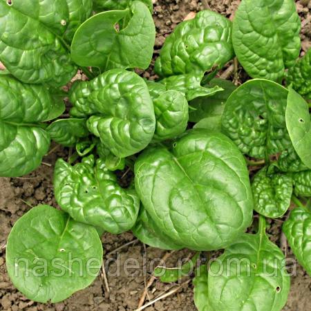 Семена шпината Матадор 500 гр. Коуел (Хортус)