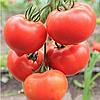 Семена томата Белфорт F1 500 сем. Enza Zaden