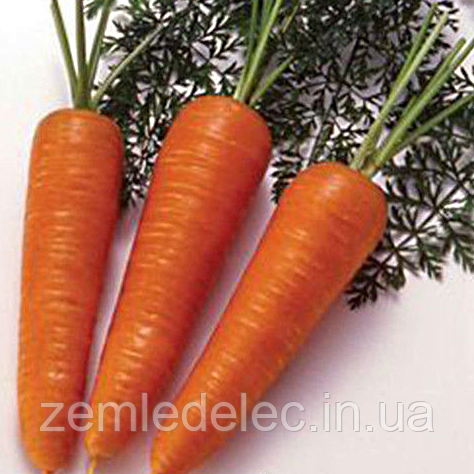 Семена моркови Нью Курода (R) 500 гр. Коуел