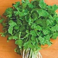 Семена кориандра Слоуболт 100 гр. Професійне насіння