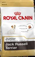 Royal Canin  Jack Russell Terrier Junior 1,5кг-корм для щенков породы джек-рассел-терьер