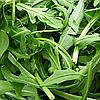 Семена рукколы Гудитта (Вайлд Рокет) 50 гр. Коуел