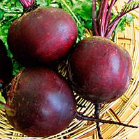 Семена свеклы Ред Бул 1 кг. Професійне насіння