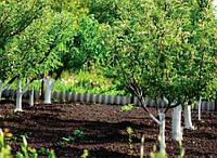 Подготовка плодовых деревьев к зиме