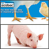Ацидбак подкислитель для комбикормов, стимулятор роста для свиней и домашней птицы