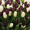 Набор луковиц тюльпанов Чёрно-белый 7 луковиц