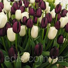 Арт-набор Чёрно-белый 7 луковиц тюльпанов