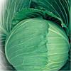 Семена капусты б/к Украинская осень 500 гр. Коуел (Хортус)