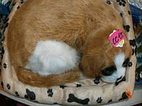 Спящий щенок который храпит и дышит