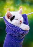 Пазлы Castorland 500шт. 51595 кошки