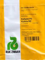 Насіння огірка Кибрия F1 1000 сем. Rijk Zwaan (Рійк Цваан)