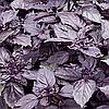 Семена базилика фиолетового Дарк Перпл 10 гр. Semo