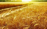 Собираете урожай? – Пора задуматься о будущем!