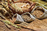 Протравители-защитники зерновых культур и гарантия урожая