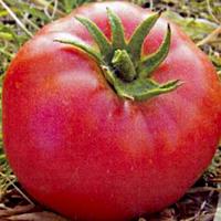 Семена томата Буги-вуги F1 индет. 20 сем. Элитный ряд