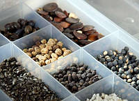 Правильное хранение семян