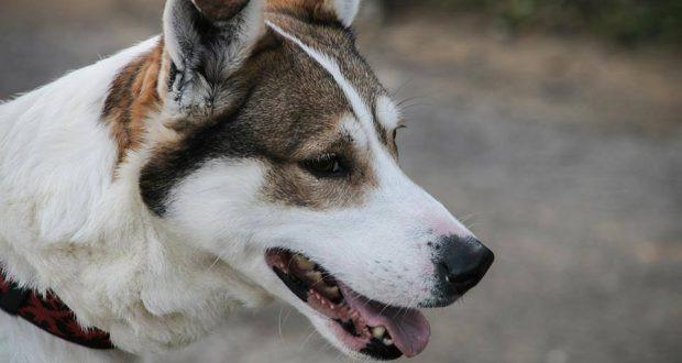 Корм для собак Trainer • Трейнер