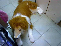 Мягкая игрушка Собака Колли