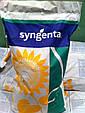 Среднепоздние семена подсолнечника Сингента Армони, фото 3