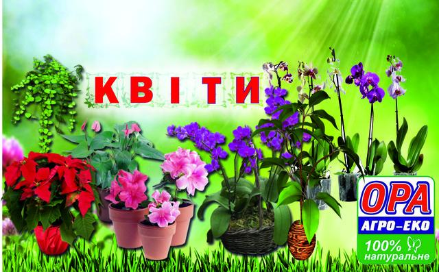 Кімнатні рослини, квіти