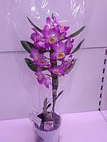 Орхідея Extra Pink ОРА АГРО-ЕКО, фото 1
