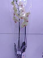 Орхідея Extra Yellow ОРА АГРО-ЕКО, фото 1