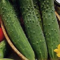 Семена Огурец Зозуля F1, 10 семян Riva