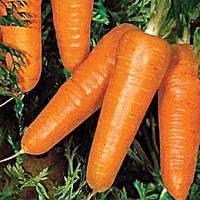 Семена моркови Редко 400 сем. Садыба Центр