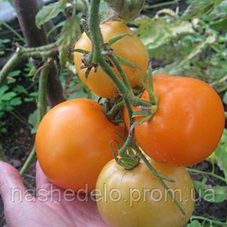Семена томата Руслан 30 сем. Элитный ряд