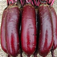 Семена свеклы Цилиндра  инкруст. 20 гр. Цезарь