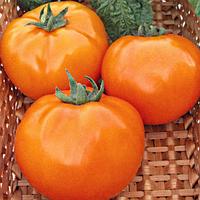 Семена томата Хурма 40 сем. Nasko