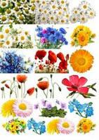 Картинки на водорастворимой бумаге Цветы полевые 1 лист / 30 листов Красный