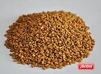 Пажитнік насіння
