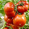 Семена томата Райское наслаждение 30 сем. Элитный ряд
