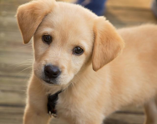 Корм для щенков средних пород Trainer Natural Puppy & Junior Medium