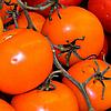 Семена томата Жираф 40 сем. Nasko