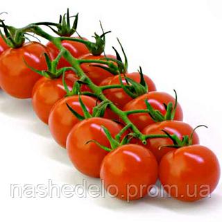 Семена томата Черри красный 40 сем. Nasko