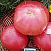 Семена томата Розовый гигант F1 40 сем. Nasko