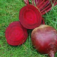 Семена свеклы Ред Сан F1 5000 сем. Професійне насіння