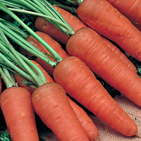 Шантане 3 гр. морковь Наско