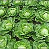Семена капусты б/к Свирель 20 сем. Садыба центр