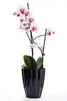 """Кашпо для Орхідеї """"Ромашка"""" 1,5л h-16,5 / непрозорий білий/чорний"""