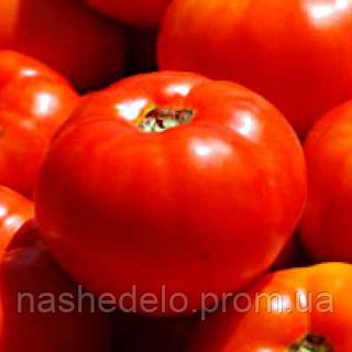 Семена томата Бобкат F1 1000 сем. Syngenta