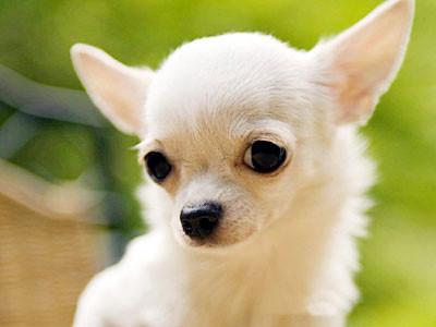 Щётка для собак овальная двусторонняя Trixie - маленькая