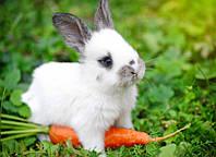 Чем кормить домашних кроликов?